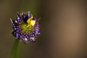 Casa rural - El Mayulon - Araña sobre una flor